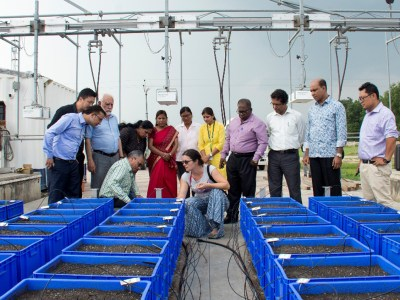 Dr Pradyumna Pandey, SAC, Dhaka, at the LeasyScan area with Dr Jana Kholova, Senior Scientist – Crops Physiology & Modeling, ICRISAT, while other participants from SAARC countries look on. Photo: P Srujan, ICRISAT