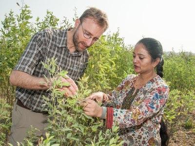Dr Benjamin Kilian from the Global crop Diversity Trust (GCDT) monitoring pigeonpea pre-breeding trials at ICRISAT, Patancheru, India