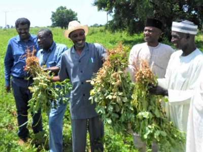 Synergies between USAID and TL III leading to the registration and release of three groundnut varieties in Nigeria in 2018. Photo: VB Michael