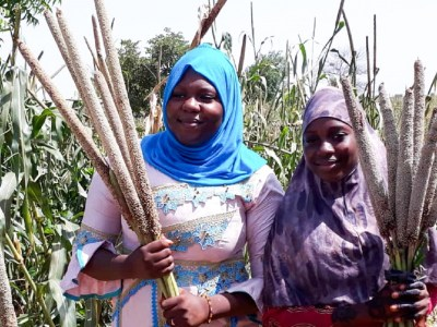 Young farmers with pearl millet ICMH 177111 (left) compared to hybrid ICMH 147007 (right) in Maradi, Niger.