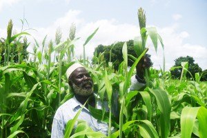 Mr Amadou Diarra, a beneficiary of the TAAT's Sorghum and Millet Compact in his Tiandougou-coura Sorghum variety production field in Missirila, Beleko, Mali. Photo. B Cisse, ICRISAT
