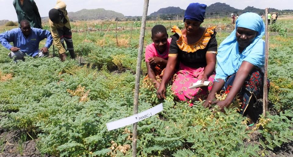 Women farmers at a chickpea farmer's field day in Mwanza, Tanzania. Photo: ICRISAT
