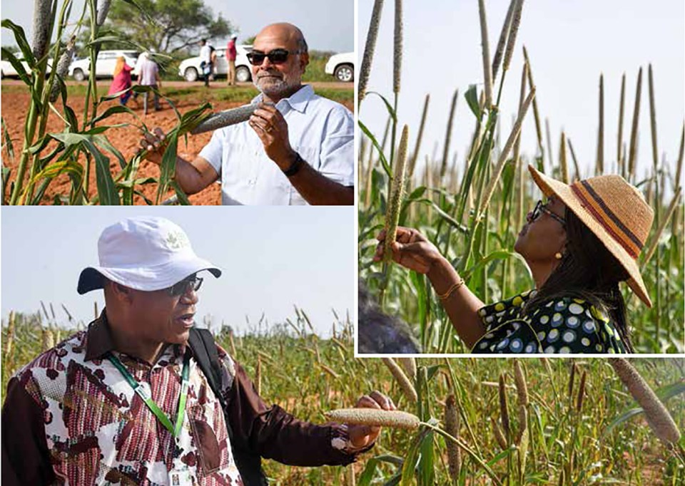Clockwise from top: Dr Prabhu Pingali, Ms Folasade Ogunde and Dr Paco Sereme in pearl millet fields at Sadoré, Niger. Photo: A Diama, ICRISAT