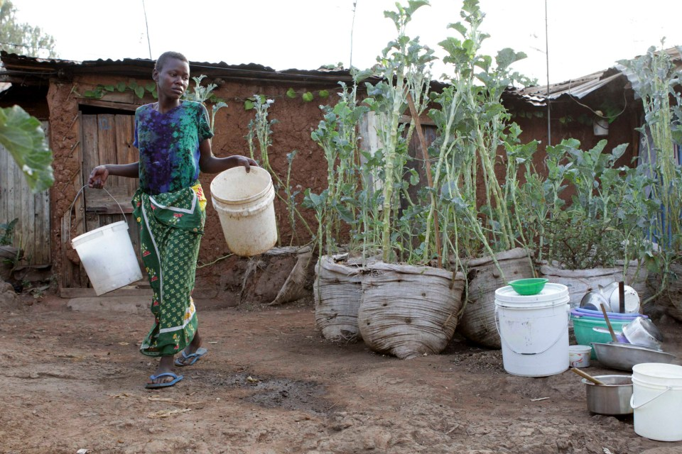 Urban farming would enhance peace in low income urban settings. Photo: The Star, Kenya