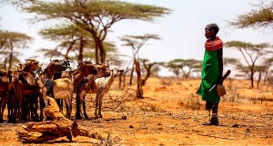 As climate change continues, severe weather events – from cyclones to droughts – will become increasingly frequent and intense. But there is a simple way to boost climate resilience for farmers in vulnerable regions: investment in goat markets. Photo:Project Syndicate
