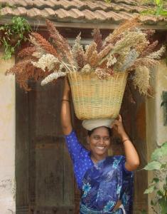 A woman farmer carries soghum.