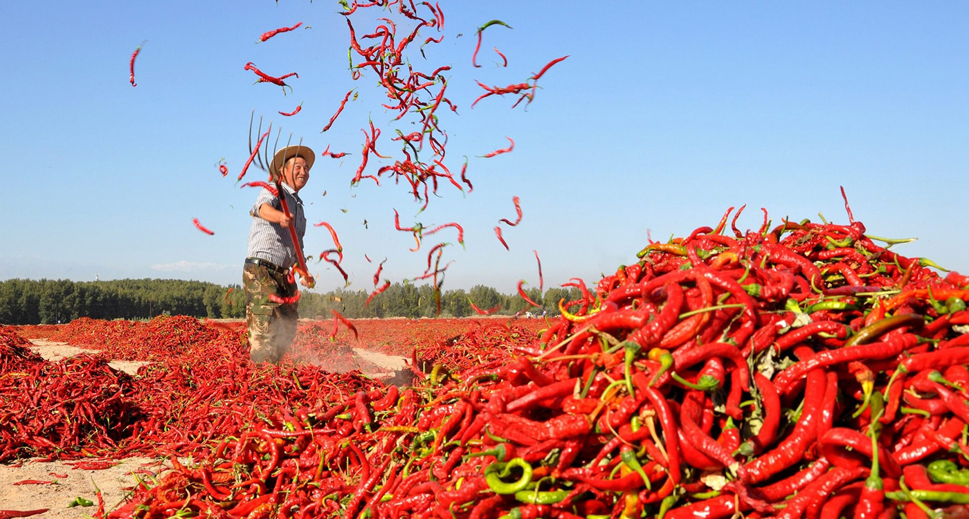 Food supply chains worldwide at a risk of disruption over the coming year. Photo: REUTERS