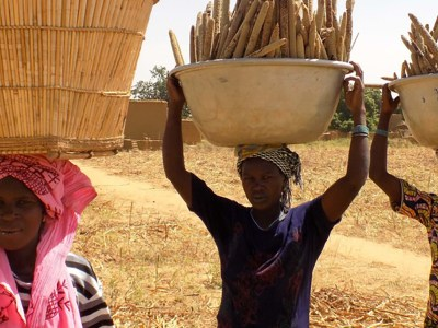 Pearl millet harvest from a field in Mali. Photo: Agathe Diama, ICRISAT
