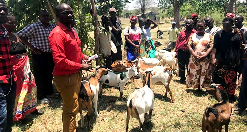 Farmers and buyers share their understanding of goat quality criteria before commencing of the sales. Photo: Temwa Mvula