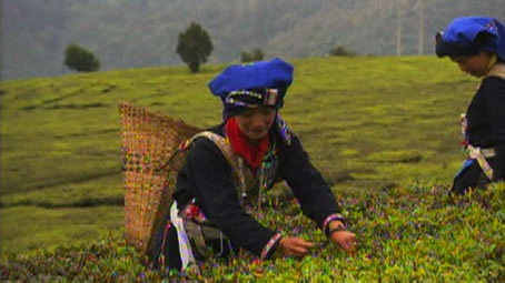 The Tea Road