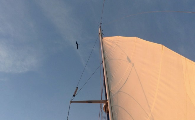 The prehistoric shape of the Frigatebird cruises overhead at sunrise, checking out the top of our mast.