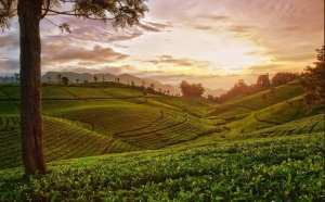 7 Best Hill Station Tour Packages in South India 8