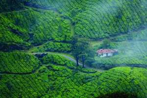 7 Best Hill Station Tour Packages in South India 7