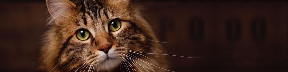 Sök i ID-registret.se - nationellt ID-register för katt