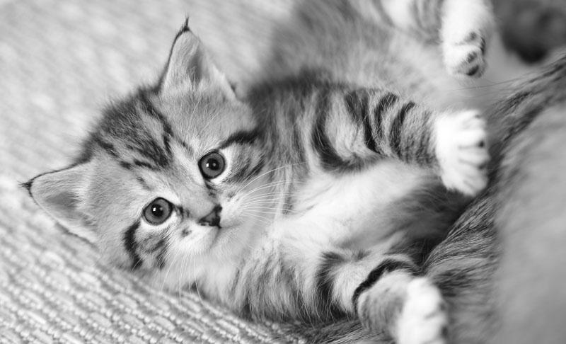ID-register för katt - hjälper din katt att hitta hem