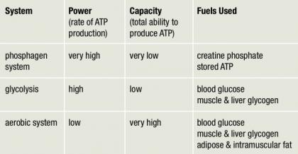 3 EnergySystems The Three Metabolic Energy Systems