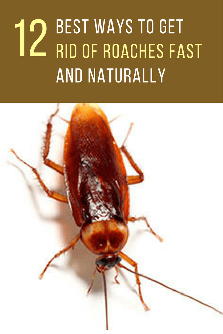 How To Get Rid Of Ants And Roaches Naturally HowstoCo