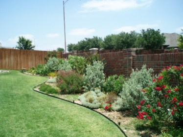 Irrigation-Sage-Rosemary-Grey-Santolina-Knock-Out-Roses.jpg