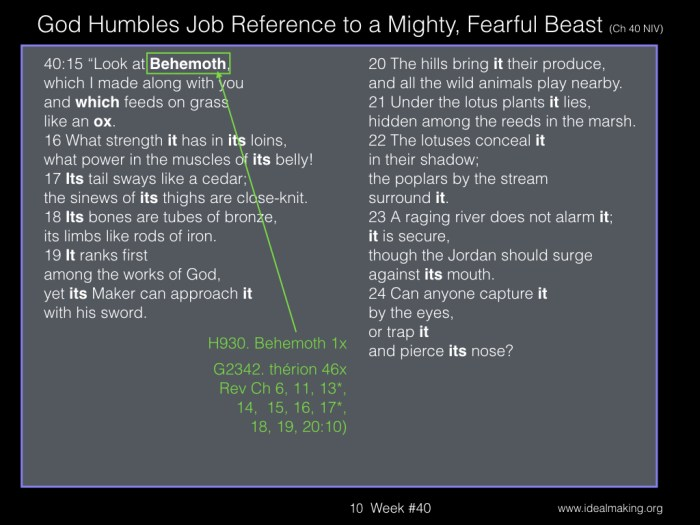 Book of Job, Week #40B.010