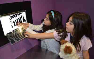 Museum Moment: The Fernicola Family