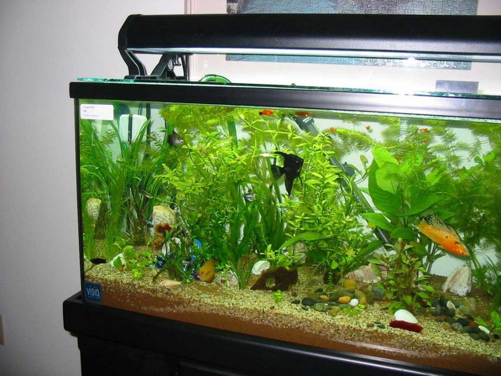 Aquatic Garden Vase