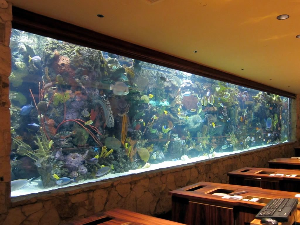 Aquarium Designs To Suit Your Home Ideas 4 Homes