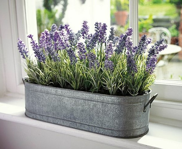 3 Scented Indoor Plants That Give Your Home A Great