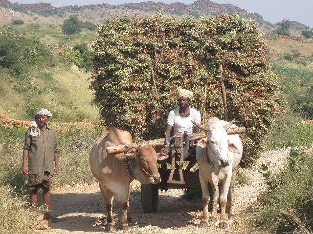 Anantapur India 2012_Ideas on Tour