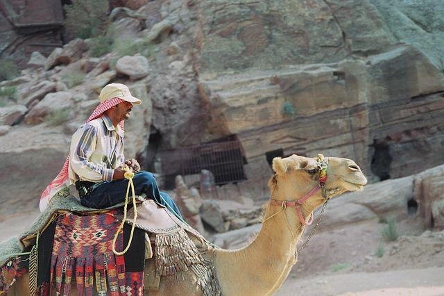travle-Let travel agents bid for your trip