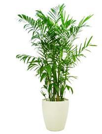 Que ventajas tiene poner plantas en la oficina for Flores para interiores con poca luz
