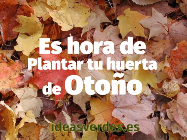 hojas_secas-1024x768