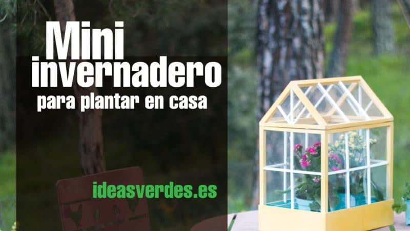 Haz tu propio invernadero para sembrar en casa ideas verdes - Invernadero para casa ...