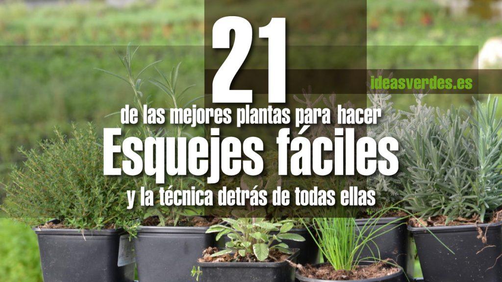 21 esquejes de plantas arom ticas muy f ciles de hacer - Plantas de exterior faciles de cuidar ...