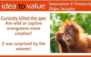 Curiosity killed the ape are wild or captive orangutans more creative I was surprised by the answer - wide
