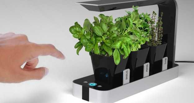 BB Garden per le tue piante da cucina  Idee Green