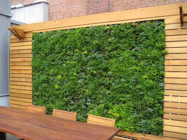 Come costruire un muro verde  Idee Green