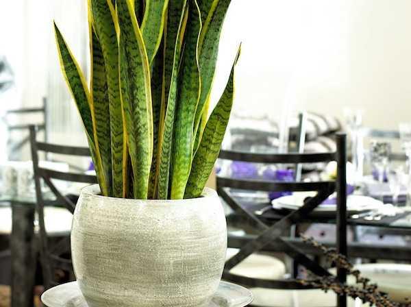 Piante ornamentali per larredo degli interni  Idee Green