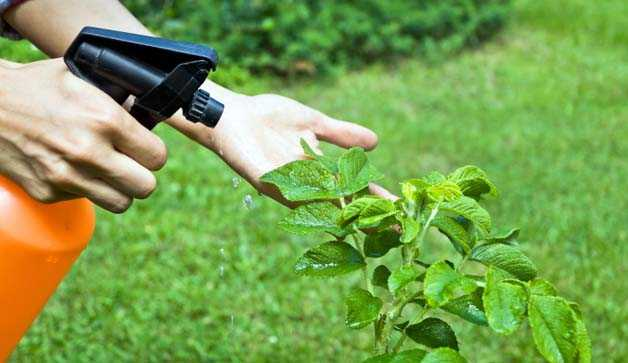 Piante Antiparassitari fai da te  Idee Green