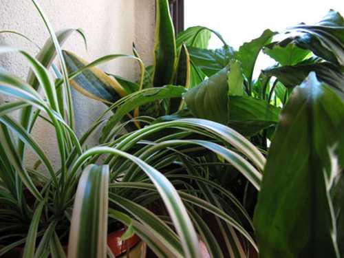 Benessere e piante da appartamento  Idee Green