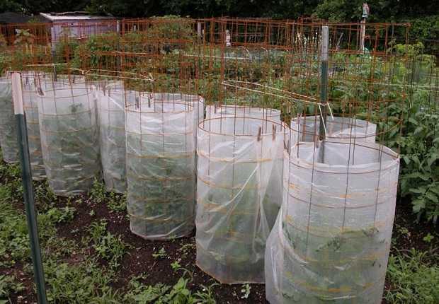 Come Proteggere Le Piante Dal Freddo Idee Green