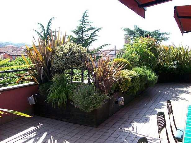 Terrazzo fiorito come scegliere le piante  Idee Green
