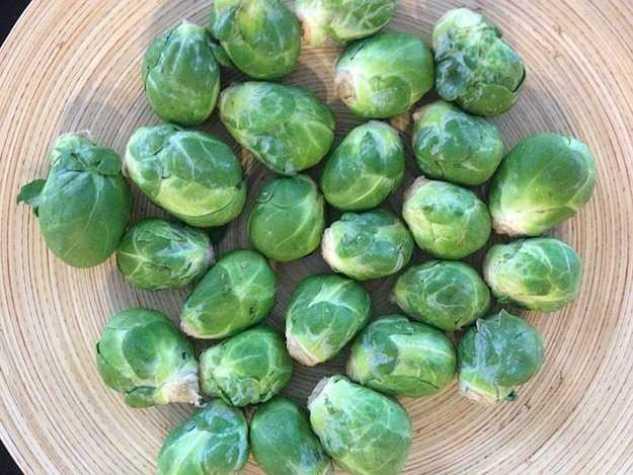 I cavoletti di Bruxelles fanno parte della famiglia delle Brassicacee ed hanno un portamento molto simile a quello del cavolo nero; si tratta di ortaggi perfetti per essere coltivati in inverno in tutte le zone del Paese