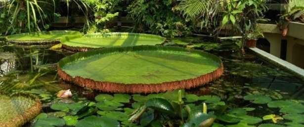 Idee per giardino  Idee Green