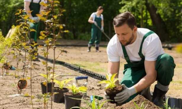 Lavori di giardinaggio  Idee Green