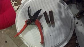 tagliare i rametti di legno con forbici