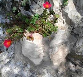 aiuola in pietra