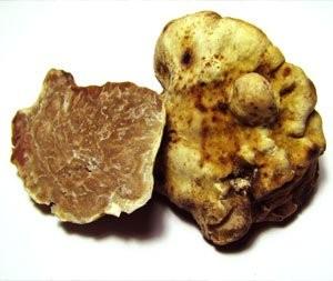 tuber-nagnatum