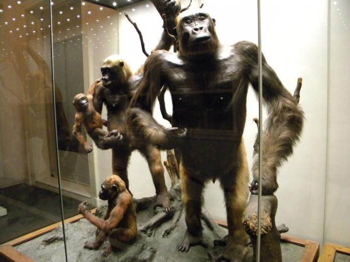 bucuresti_romania_muzeul_national_de_istorie_naturala_grigore_antipa_b-ii-m-a-18983_rudele_noastre-1024x768