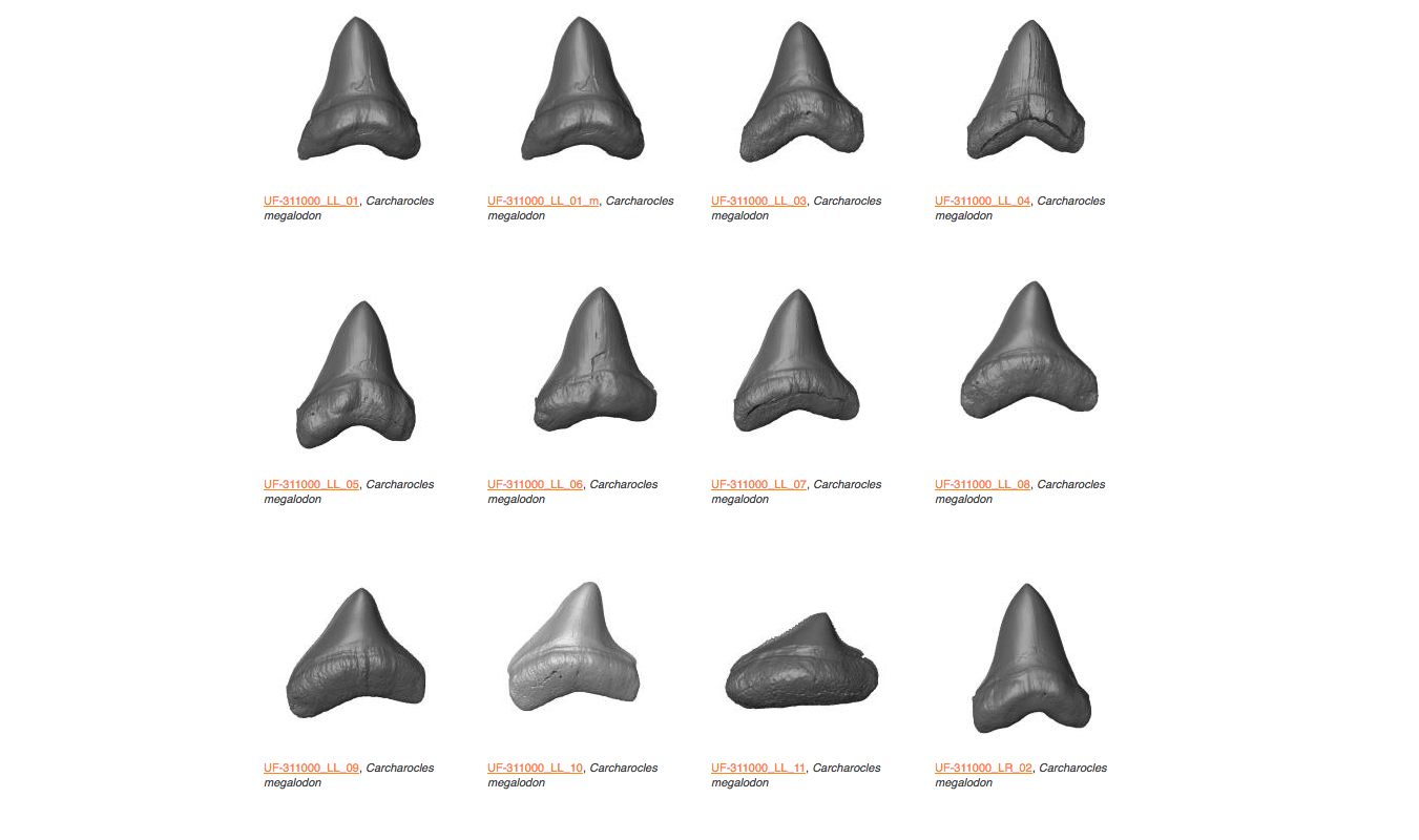 A Comparison of Carcharodon carcharias (Great White Shark