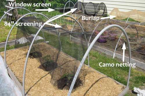 Vegetable Garden Shade Ideas